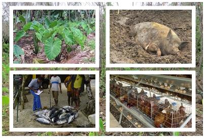 Enquête Agricole 2014 – 2015 des îles Wallis et Futuna